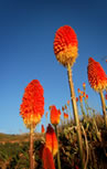 Breathtaking Flora at Tala Private Game Reserve 